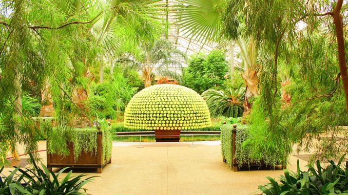 Longwood Gardens shows off its chrysanthemum collection. | Tyra Lockhart TTN