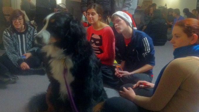 Klaus, a Bernese Mountain Dog, was a favorite therapy dog among participating students during finals week. | Sarai Flores TTN