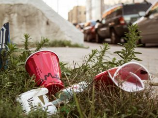 Empty cups and a cigarette pack sit in grass near Main Campus. 28 alcohol citations were issued during Homecoming weekend. Margo Reed | TTN