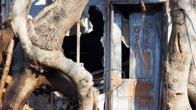 Trees reclaim an abandoned property on North Delhi Street, between Diamond Street and Susquehanna Avenue.   Alex Friend TTN