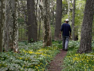 Senior Christopher Sohnly strolls through the Ambler Arboretum on May 1. Sohnly helped to build trails for the Gheel House, a therapeutic living community located near Frech Creek State Park. | Harrison Brink