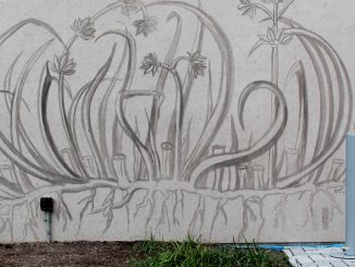 Caroline Rothwell, a British artist, created a mural of a Philadelphia endangered plant species using the soot from carbon emissions. It is currently on the north wall of the Montgomery Garage. | Kathryn Stellato TTN